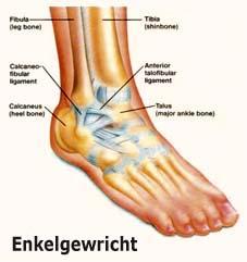 De enkel en de voet